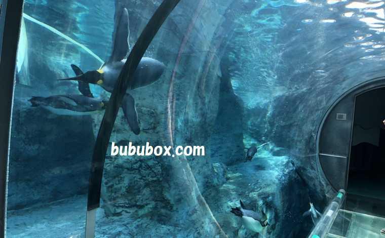 旭山動物園 ペンギンのトンネル