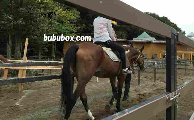千葉市動物公園 乗馬
